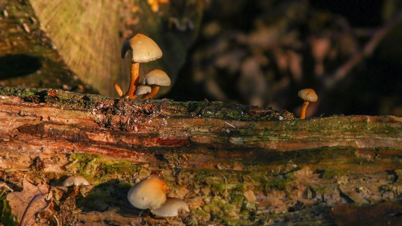Mushrooms - Headley Heath